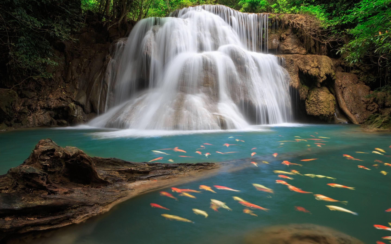 waterfall koi pond
